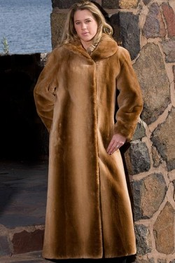 Plucked, sheared, and dyed ginger beaver coat