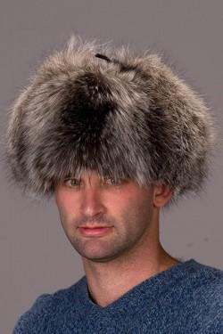 Raccoon Alaskan